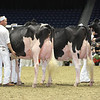Royal16_Holstein_L32A4397