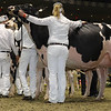 Royal16_Holstein_1M9A0794