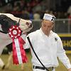 Royal16_Holstein_1M9A0426