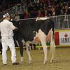Royal16_Holstein_1M9A0449