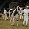 Royal16_Holstein_1M9A0532