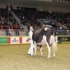 Royal16_Holstein_1M9A0648