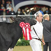 Royal16_Holstein_L32A4369
