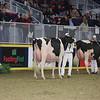 Royal16_Holstein_L32A4474