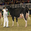 Royal16_Holstein_1M9A0732