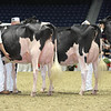 Royal16_Holstein_L32A4396