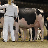 Royal16_Holstein_1M9A0796
