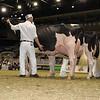 Royal16_Holstein_1M9A0659