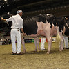 Royal16_Holstein_1M9A0661
