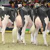 Royal16_Holstein_L32A4433