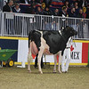 Royal16_Holstein_L32A4486