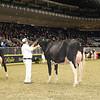Royal16_Holstein_1M9A0396