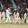 Royal16_Holstein_L32A4430