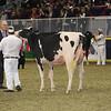 Royal16_Holstein_1M9A0438