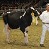 Royal16_Holstein_1M9A0429