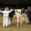 Royal16_Holstein_1M9A0402