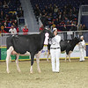 Royal16_Holstein_L32A4293
