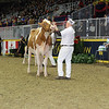 Royal16_Holstein_L32A4313
