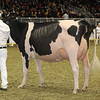 Royal16_Holstein_1M9A0773