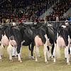 Royal16_Holstein_1M9A0710