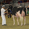 Royal16_Holstein_1M9A0730