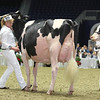 Royal16_Holstein_L32A4490