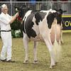 Royal16_Holstein_1M9A0761