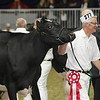 Royal16_Holstein_L32A4376