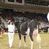 Royal16_Holstein_1M9A0379