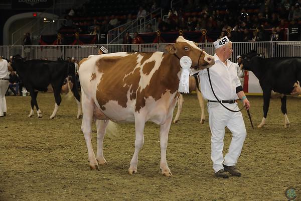 Royal16_Holstein_1M9A0538
