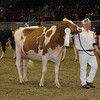 Royal16_Holstein_1M9A0538
