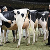 Royal16_Holstein_1M9A0407