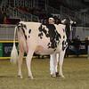 Royal16_Holstein_1M9A0580