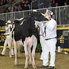 Royal16_Holstein_L32A4196