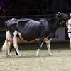 Royal16_Holstein_1M9A1611