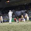 Royal16_Holstein_1M9A1723