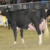 Royal16_Holstein_1M9A1237
