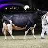 Royal16_Holstein_1M9A1605