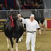 Royal16_Holstein_L32A4786