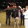 Royal16_Holstein_1M9A1835