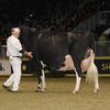 Royal16_Holstein_1M9A1690