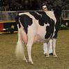Royal16_Holstein_1M9A1362
