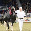 Royal16_Holstein_L32A4788