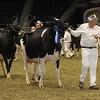 Royal16_Holstein_1M9A1318
