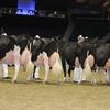 Royal16_Holstein_L32A4803