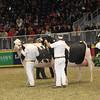 Royal16_Holstein_1M9A1631