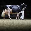 Royal16_Holstein_1M9A1538