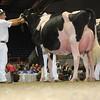 Royal16_Holstein_L32A4720