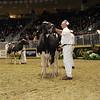 Royal16_Holstein_1M9A1172
