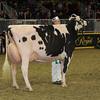Royal16_Holstein_1M9A1347